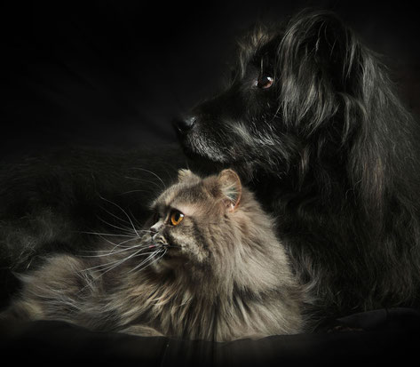Kater Picasso und Hund Rino