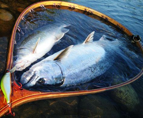 桜鱒と岩魚ちゃん^^