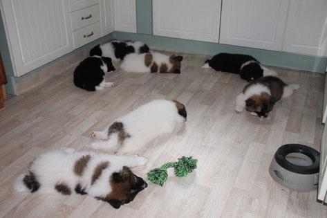 kleine Pause in der Küche!