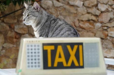 ペットタクシーの画像(タクシーと猫)