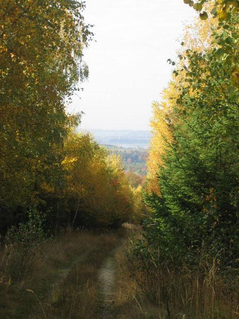Auf dem Weg zur höchsten Erhebung im Rhein-Hunsrück-Kreis: Dem Simmerkopf