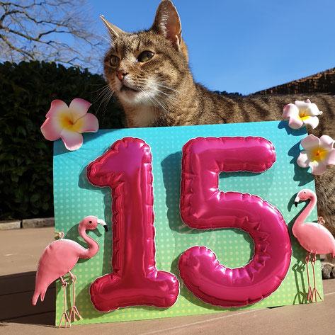 Katzenmädchen Hermine wird 15 Jahre
