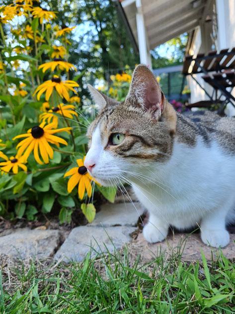 Katzenmädchen Kasi ist Teilzeitfreigänger