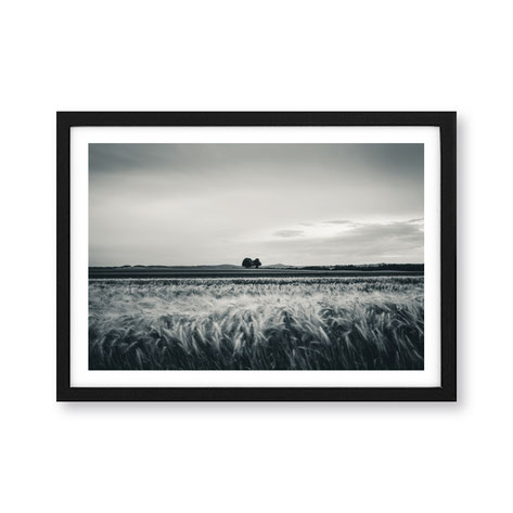 "Artprint ""fields of gold"""