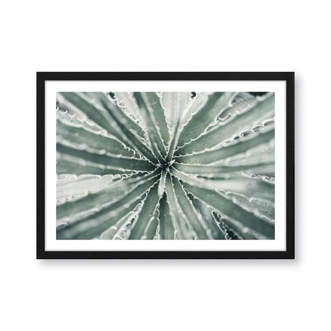"Artprint ""Aloe Vera"""