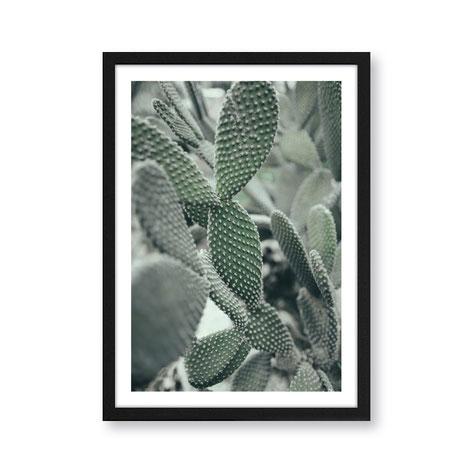 """Artprint """"Cacti"""""""