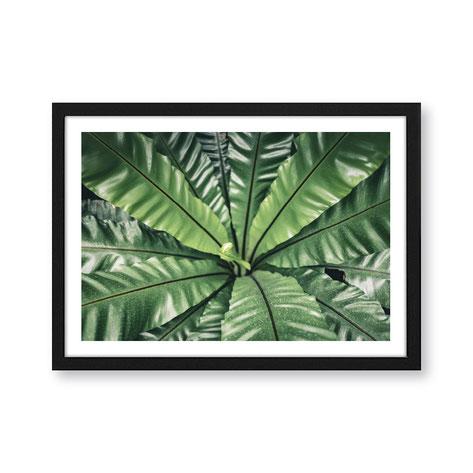 """Artprint """"Botanik"""""""