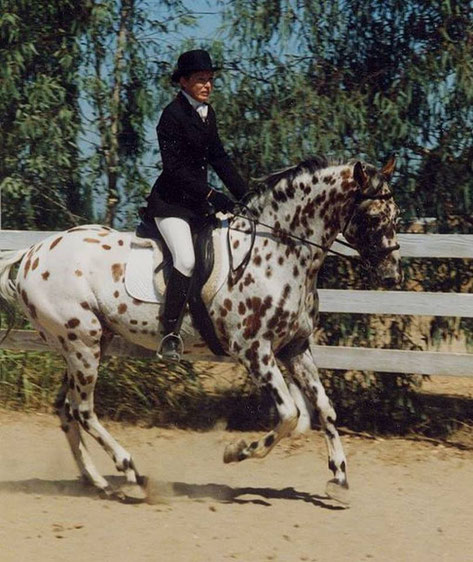 Appaloosa Old-Line | Appaloosa Old-Foundation Foundaloo(sa) | Sunspot's Eclipse Appaloosa Hengst | Appaloosa Sport Horse | Appaloosa Classic | By SIX C Appaloosa