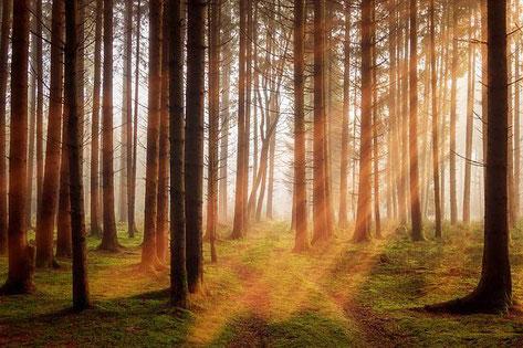 ©Baumwipfelpfad Bayerischer Wald Neuschönau