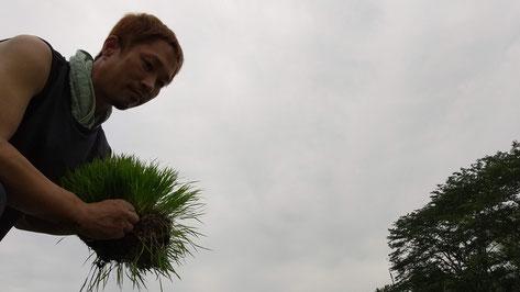 田植えの様子の写真