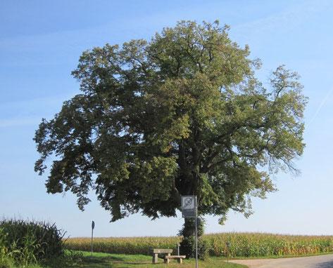 Foto: Schwäbin (Wikimedia) Lizenz: CreativeCommons by-sa-3.0-de (Kurzfassung). Die Originaldatei ist hier zu finden.