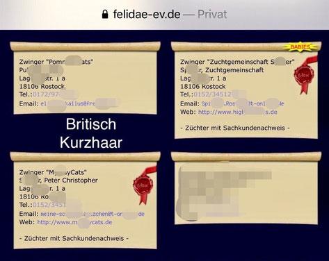 April 20202, Verkaufsannonce von British-Kurzhaar-Babys der Zuchtgemeinschaft S. aus Rostock auf der Webseite von felidae-ev.de