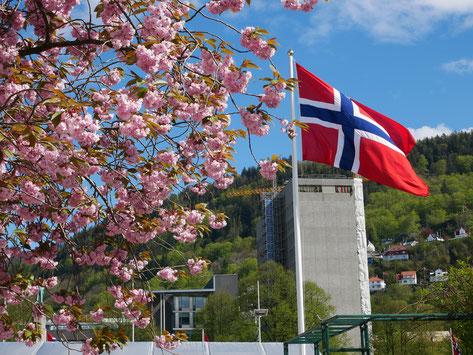 Während des Nationalfeiertags, dem 17. Mai, waren in der ganzen Stadt Norwegenflaggen gehisst