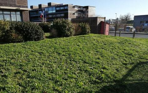 permaculture à la banque de France à Poitiers avec API'zone