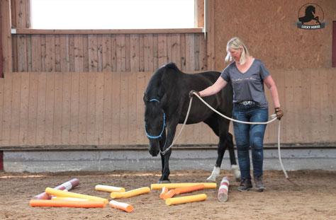 Spieletag Pferd, Play Day Pferd, Poolnudelgasse, Bodernarbeit, Knotenhalfter, Lehrgang Horsemanship