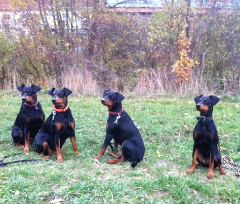 Nov. 2018 Geeva, Sunny, Maggie und Lela beim Spaziergang ;-))