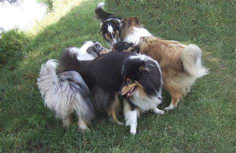 Samstag nachmittags stetsHunde-Gruppen-Trainingin Günzburg für alle Mensch-Hunde-Teams