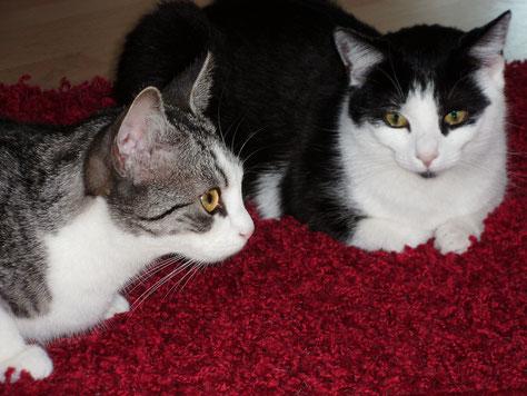 Rocky und Lisa