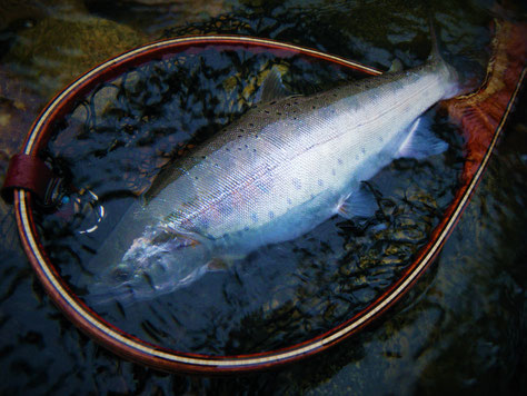 夏山女魚 by Redeye 52 R