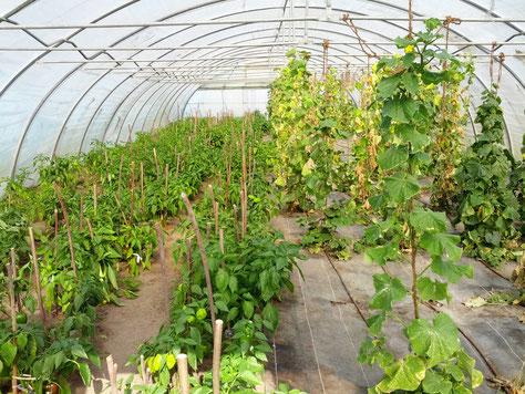 Selbstversorgung mit Gemüse