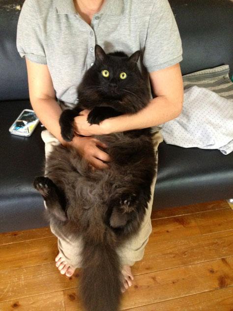 陶芸家 ブログ 焼き物 陶芸作品 茨城県笠間市 猫 ペット ペットの死 虹の橋 ペットロス