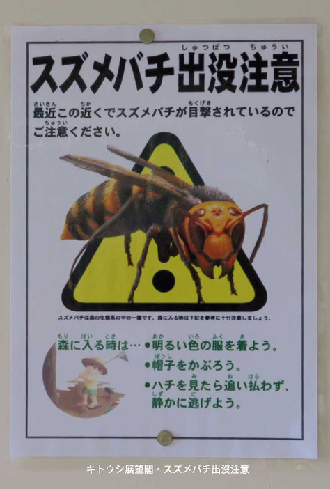 スズメバチ要注意