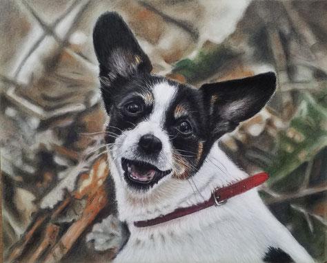 Stella,  50x60 ,  Pastellkreide, 2019      Auftragsarbeit