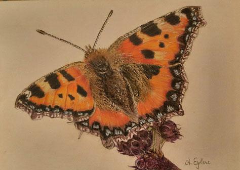 Schmetterling,  20x30 ,  Buntstifte 2021