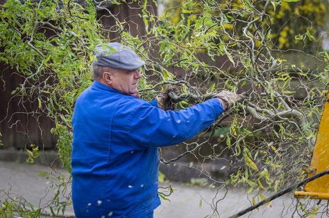 Hausmeisterservice Wüstefeld (Northeim - Moringen): Mitarbeiter beim Baumschnitt
