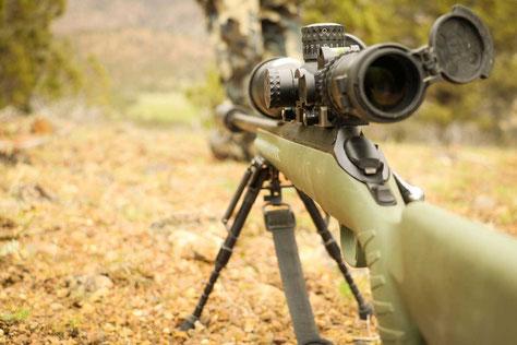 Krähenjagd mit der Kugel - Luftgewehr und Kleinkaliber