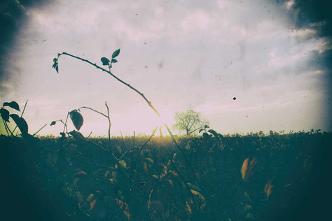 Jagd im Herbst bedeutet nicht nur Drückjagd auf das Reh