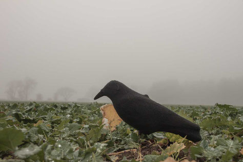 Nebel ist schlecht bei der Krähenjagd.