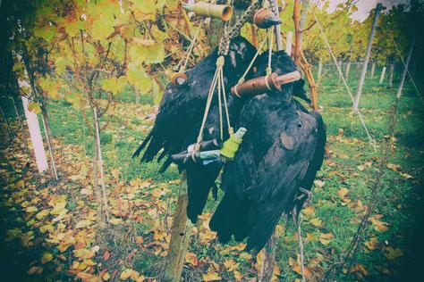 Der Krähenlocker für die erfolgreiche Jagd auf Krähen