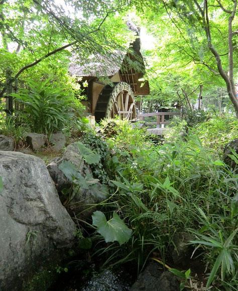 7月14日(2013) 深大寺水車館:玄米や小麦、蕎麦などを持参すると、精米や製粉を体験できる(要予約)