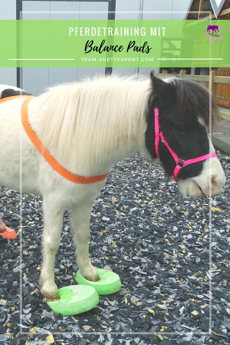 Pferd mit Balance Pads: Propriozeptives Training