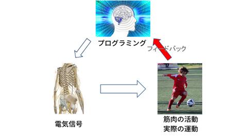 運動学習 運動神経 スポーツ