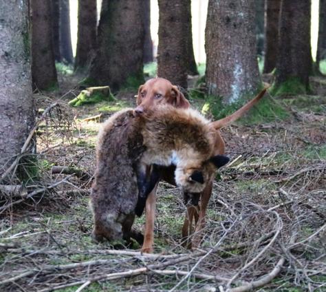 Hunt & Hound - Jagdhund-Seminar zur Vorbereitung HZP