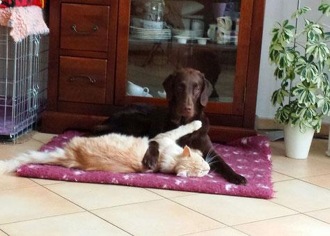 Samba mit ihrem Katzenfreund