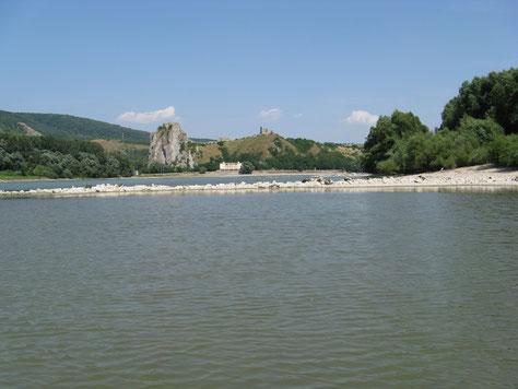 Eine Buhne die vollständig aus dem Wasser schaut. Bei höherem Wasserstand wäre an dieser Stelle ein Schwall. (Dahinter die Burgruine Devin/Theben kurz vor Bratislava.