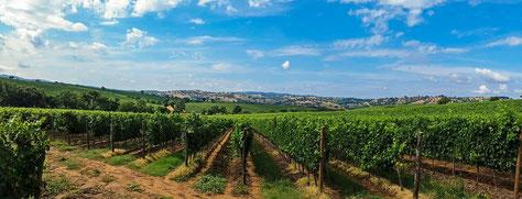 Toskana, Wein, Italien