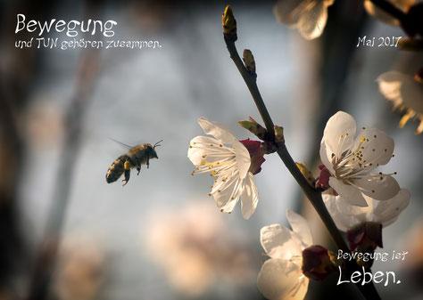 Burgstaller Biene in Bewegung