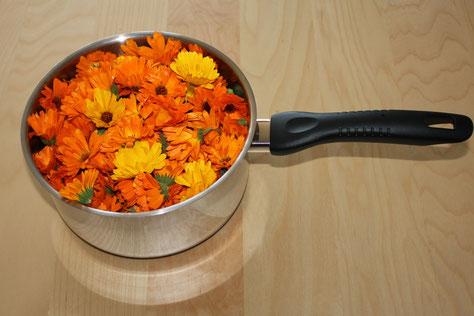 Ringelblumen, naturbelassen an Blütentagen gesammelt für die Ringelblumen Salbe