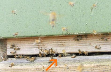 #Bienen #Flugloch #Bienenstock #Bodenbrett Beute
