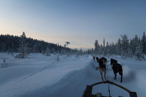 Endlich ordentlich Schnee bei unserem Trip nach Lappland