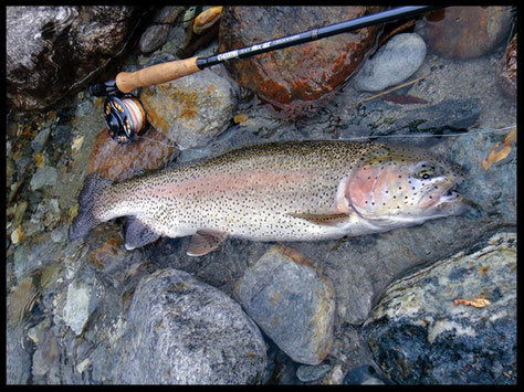 Bella iridea, catturata pescando con il filo