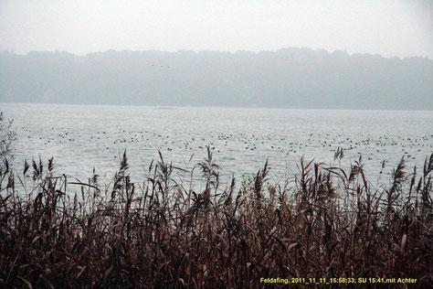 Wasservögel mit Achter
