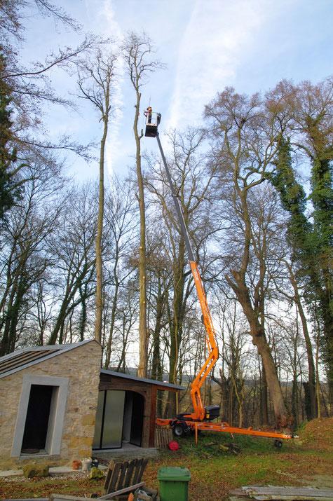 Baumservice Lehmer Kran und zwei Bäume