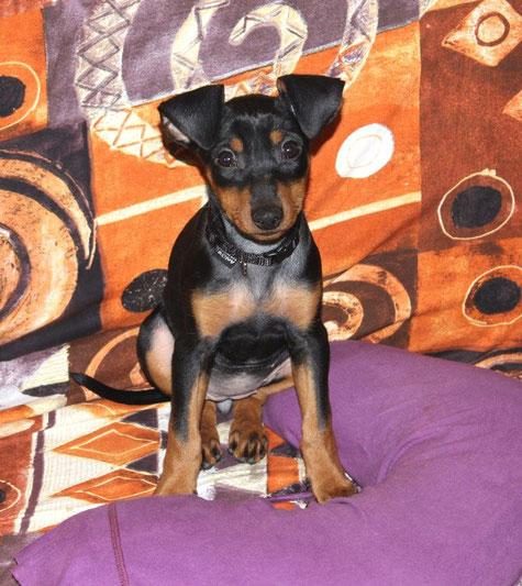 Sookie (Grace Kelly vom Sylbachtal, 12 Wochen alt) fühlt sich in ihrer neuen Familie sichtlich wohl ;-))