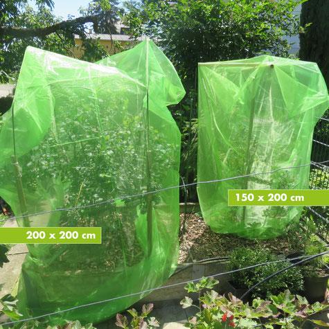 Schutz für Strauchbeeren gegen Schädlinge im Hausgarten