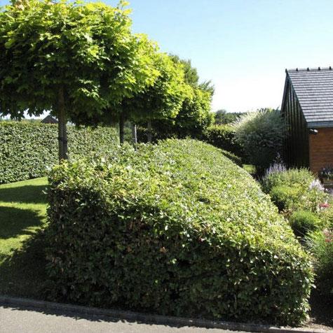 Jardin structuré créé par Jean Nickell